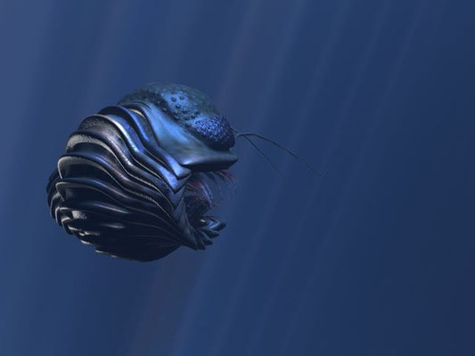 Gerastos, a Devonian trilobite from Morocco. The 3D model has articulated segments, legs, gills and antennae.