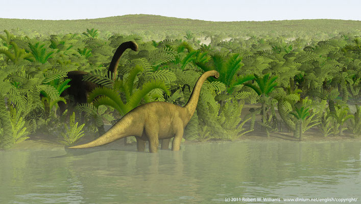 Cetiosaurus graze on ferns and cycads on the Brent delta between Norway and Scotland during the Bajocian, 170 million years ago.
