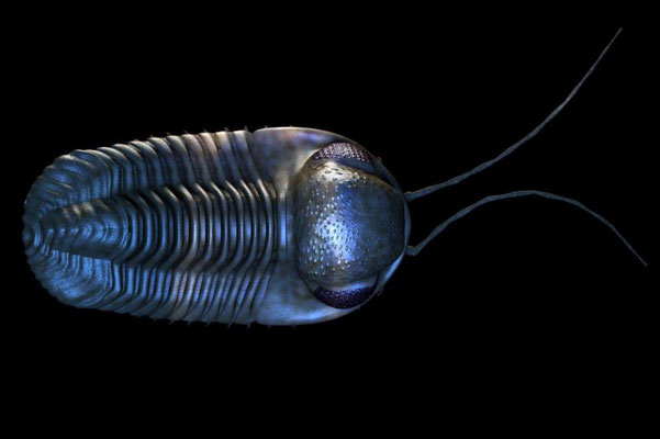 Gerastos, a Devonian trilobite from Morocco.The 3D model has articulated segments, legs, gills and antennae.