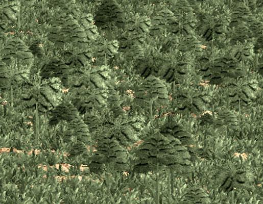 Detalj av forrige bilde. Archeopteris og Eospermatopteris dekker randen av en flomslette som inneholder de første avsetninger på norsk kontinetalsokkel. Disse var de første planter som utviklet seg til trær.