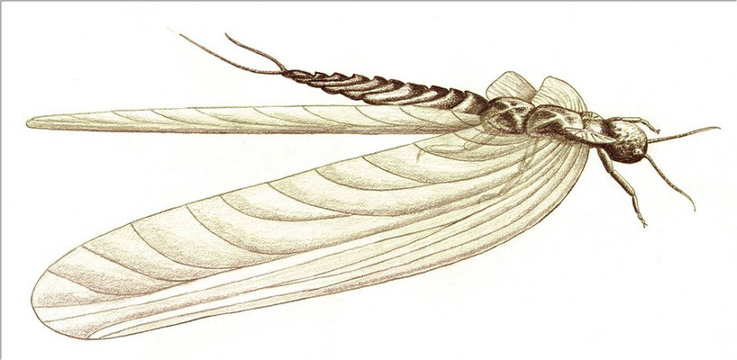 Giant dragonfly of the Carboniferous