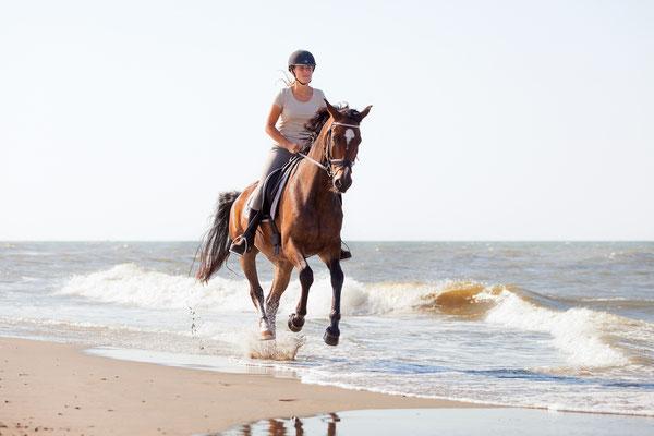 Mit Pferd auf Norderney
