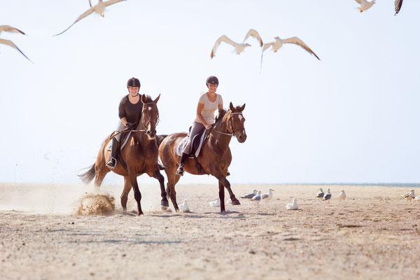 Pferde Norderney