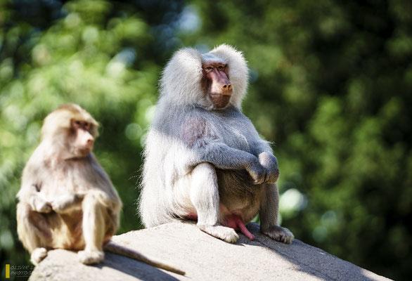 Mit freundlicher Genehmigung vom Tierpark Hagenbeck