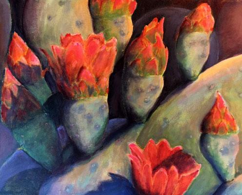 Small Opuntia (Succulent 51)