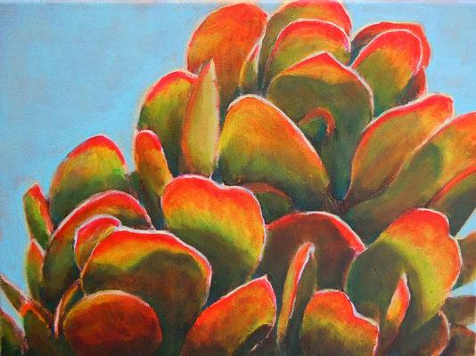 Succulent 39