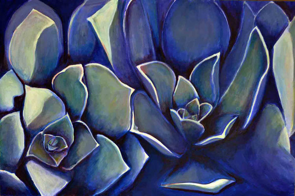 Blue Succulent (succulent 28)
