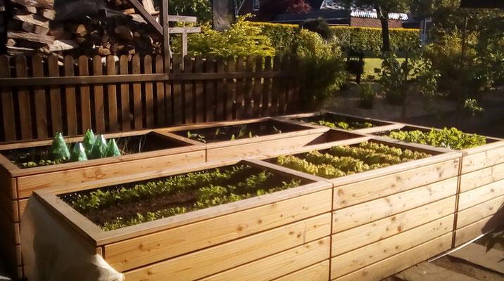 Hochbeet in U-Form, wetterfestes Holz, Douglasie - Oberfläche: Natur