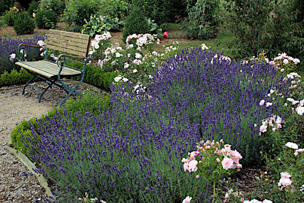 Der Rosengarten in den Niedergärten