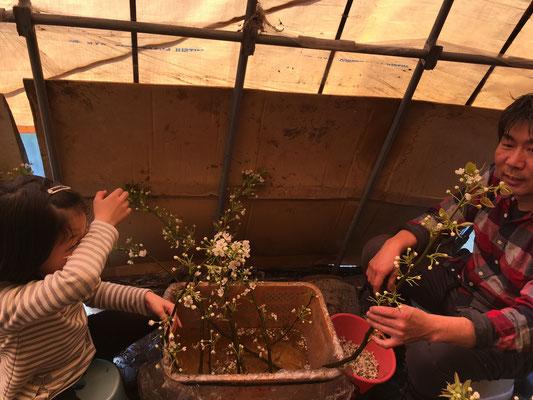 咲いている花を手で摘む
