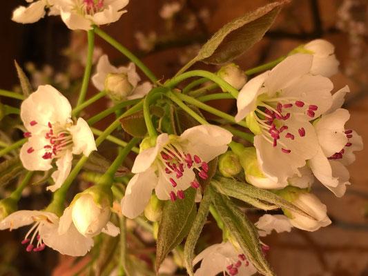 この咲いた花を摘む