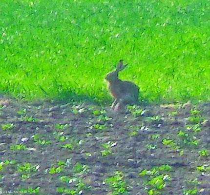 der Hase..ein Symbol für Fruchtbarkeit und die Frühlingskraft