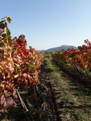 Herbstlich wird es im Weingarten!