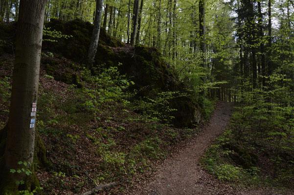 Direkter Weg zurück von Neudorf nach Muggendorf durch schönen Mischwald