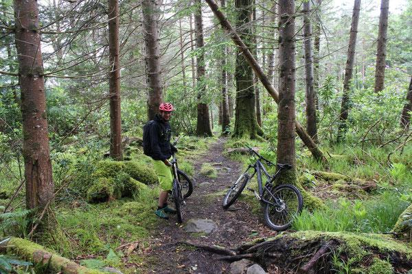 Biken in Killarney National Park (kurz vor dem Regen)