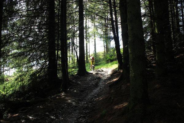 Glenntress trail center