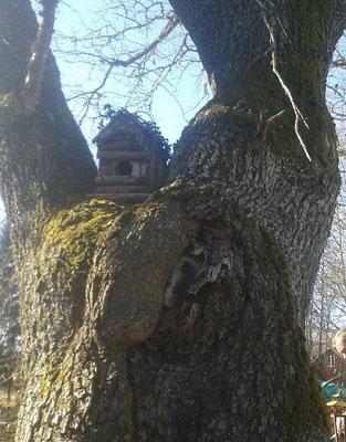 Das Käuzchenhaus in der Eiche