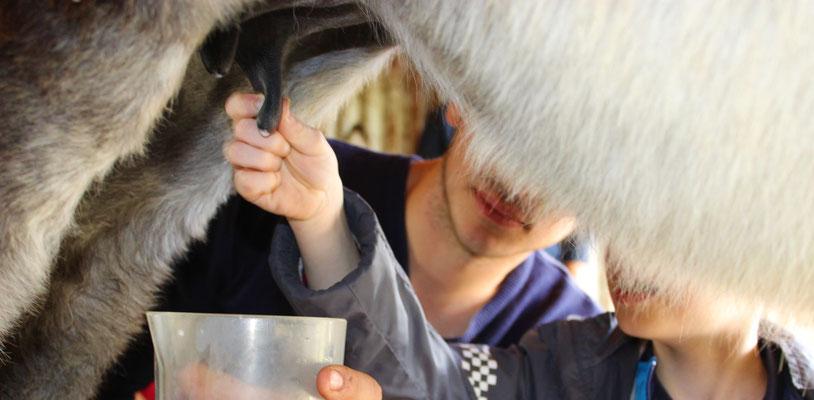 Lait d'ânesse - Ariège - Animation à la ferme