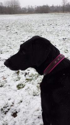 Hundehalsband Pink mit Strass