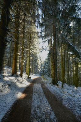 Sentier hivernal, Vosges