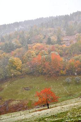 L'hiver en automne, Vosges