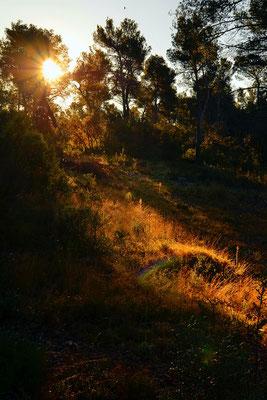 Dernier rayon, Provence