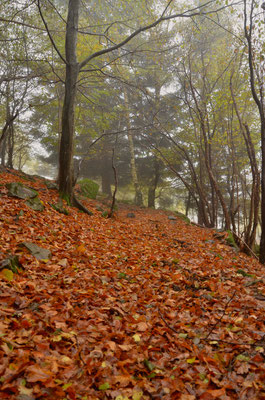 Hêtraie à l'automne
