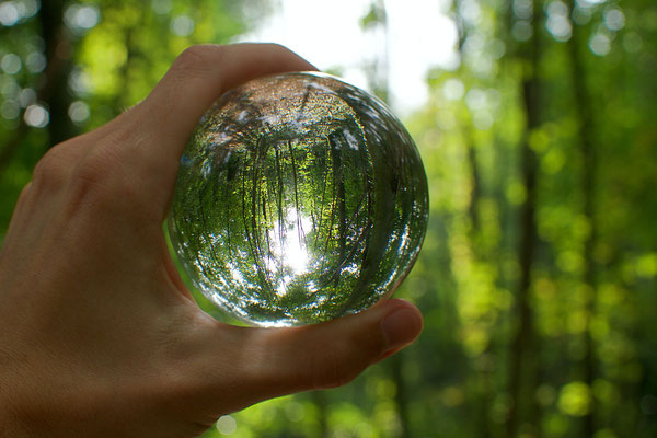 Sphère forestière
