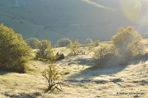 Paysage gelé (juin, 1600 m., Galicica)