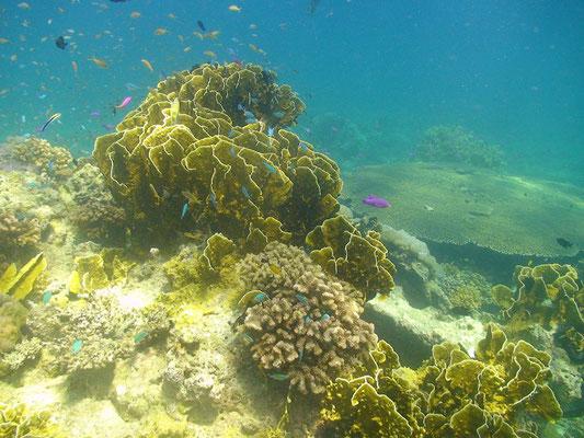 reef of sipaway