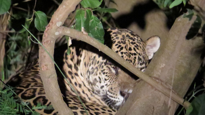 Kurzer Blick auf unseren Jaguar