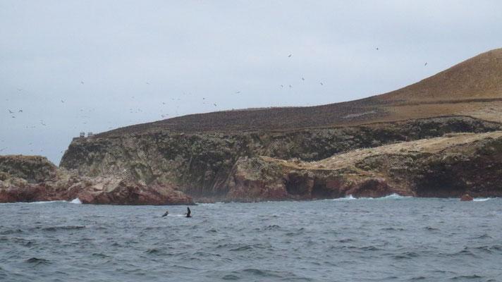 Millionen von Wasservögel, Islas Bellestas