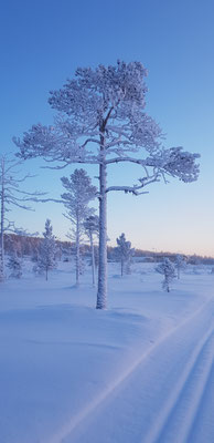 Winter Wonderland Lappland