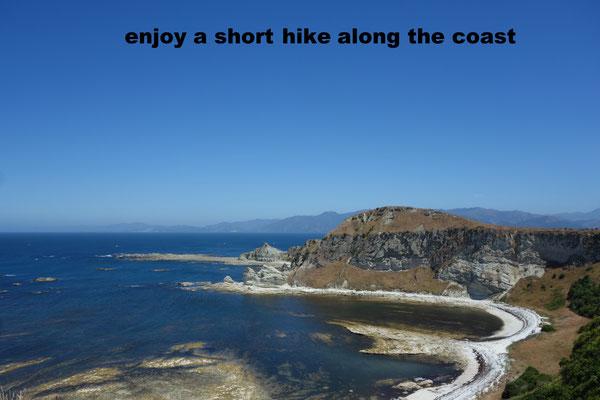 Kaikoura Coastal Walk NZ