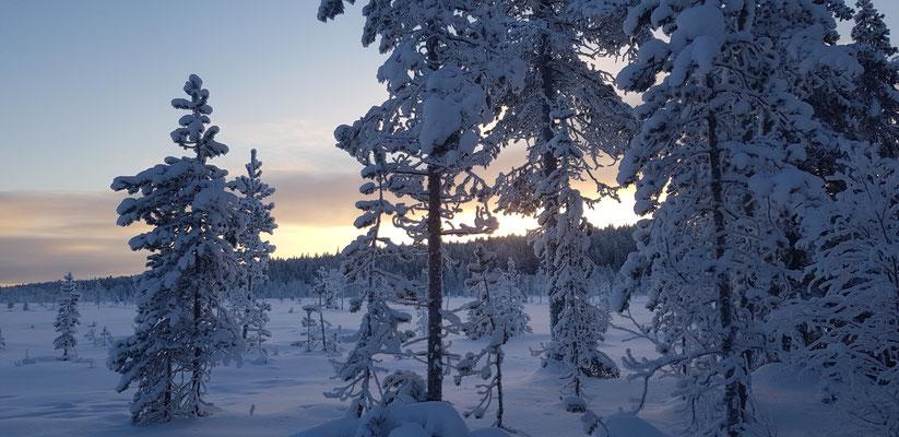 Wintertime Lappland