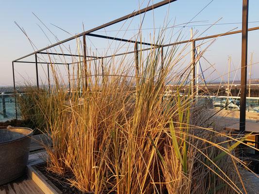 Terrasse at Airrepublic
