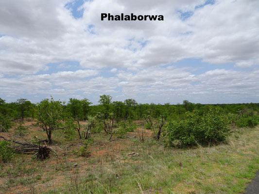 Phalaborwa Gate Krüger Nationalpark South Africa