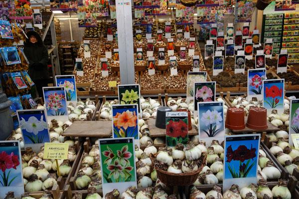 Flower Market Amsterdam Holland