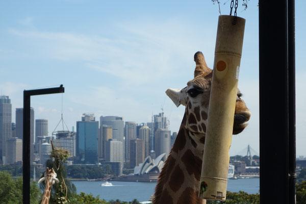Toranga Zoo Sydney