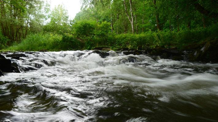 Schäumender Bachlauf in sattgrünem Wald