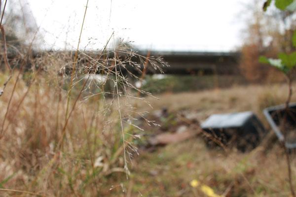 Naturimpression mit verschwommener Brücke im Hintergrund