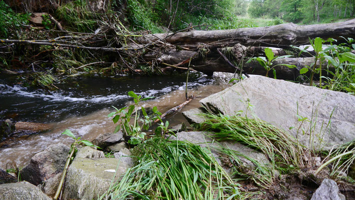 durch Hochwasser an Bach abgelagerter Schutt und entwurzelter Baum
