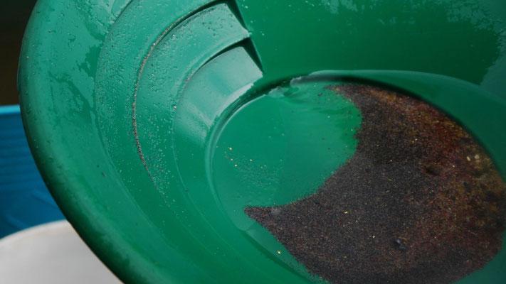 Goldstücke in grüner Goldwaschpfanne
