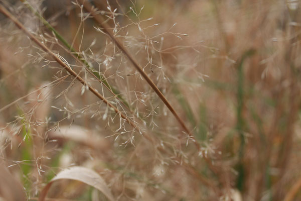 Nahaufnahme Gras