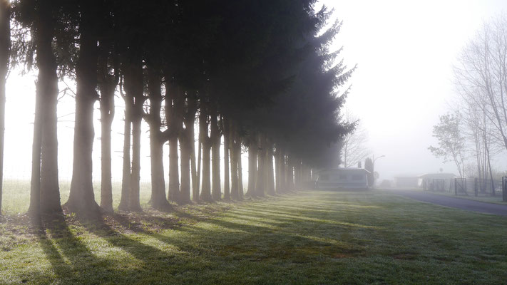 Bäume im Nebel bei Sonnenaufgang