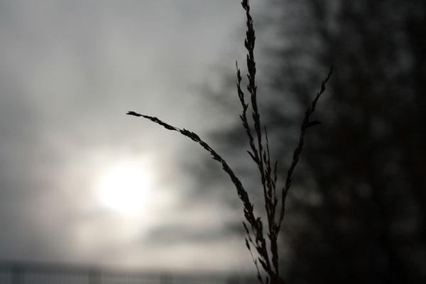 Nahaufnahme Gras bei Sonnenuntergang
