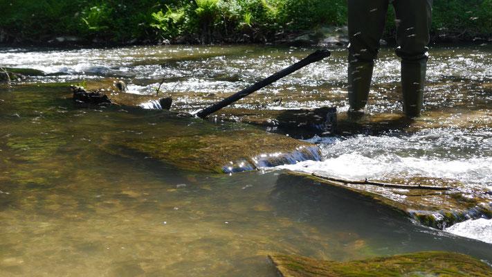 Insektenschwarm an Fließgewässer