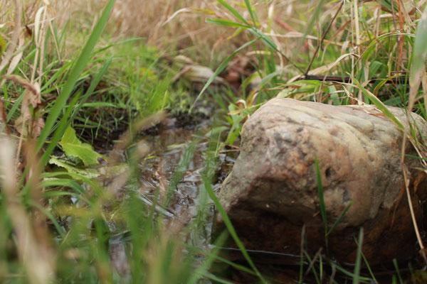 Kleiner Wasserlauf mit Stein und Gras