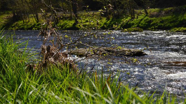 Naturimpression von Fluss im Sommer