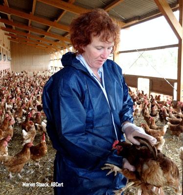 Nicht nur Theorie: Einige Hühner werden genauer angesehen: Alles Bestens